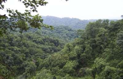 Hasta el miércoles se recibirán proyectos de Conservación y Manejo de Bosques Nativos
