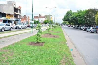 Hasta agosto se prevén plantar más de 5000 árboles