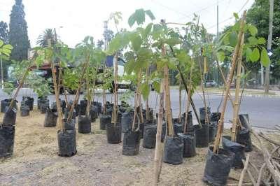 Hasta la fecha se plantaron 2000 árboles en la ciudad