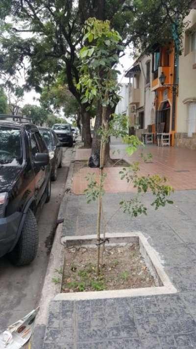 La Municipalidad fomenta la plantación de árboles en la ciudad